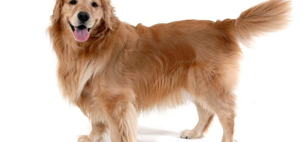 Pet Insurance That Covers Preexisting Conditions