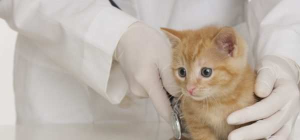 Understanding Pet Insurance for Cats