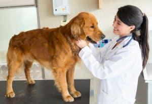 veterinarian visit