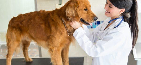 Affordable Pet Insurance For Your Beloved Pet