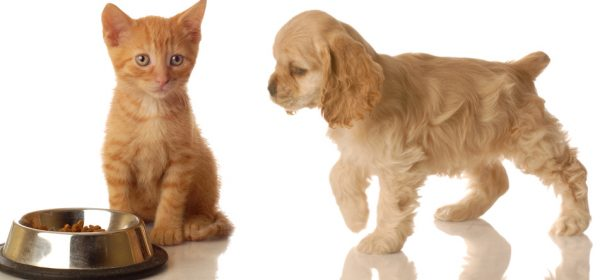 How To Find Cheap Pet Insurance