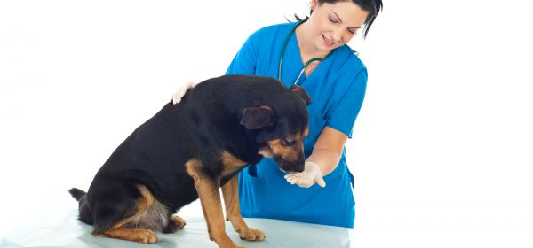 Pet Vaccinations To Keep Your Pet Healthy