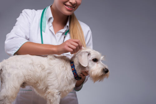 Cushings Disease In Dogs And What You Need To Know