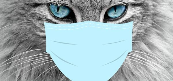 A Guide to Cat Health Care and Veterinary Medicine
