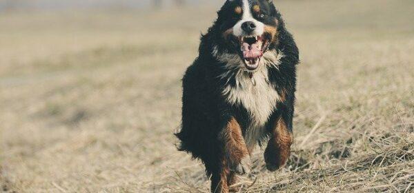 Choosing A Vet That Offers The Best Pet Health Insurance Options