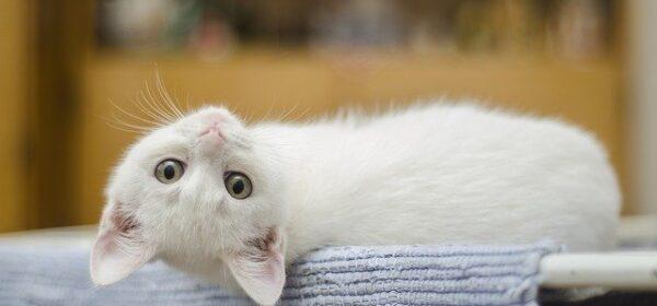 Kitten Timeline – Part One