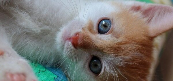 What To Expect When You Introduce A Kitten To Your New Home