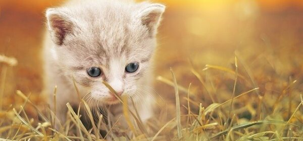 Rearing Kittens – Tips To Take Care Of Your Baby Kittens