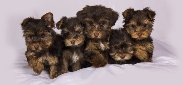Puppy Health Care Information for Your New Family Addition