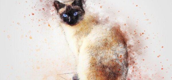 Siamese Cat Breeds