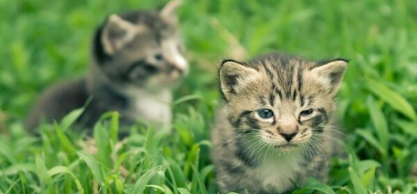 How to Provide Your Pets With a Healthy Life