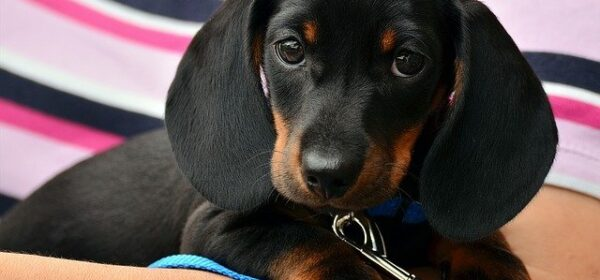 Puppy Training 101 – Part Four: Selecting Your Puppy's Parents