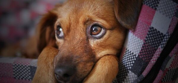 Puppy Development – Getting Your New Puppy Ready For Adoption