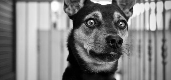 Dog Care – The Basic Elements