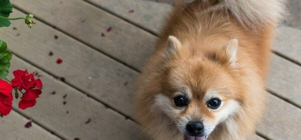 Healthy Dogs: A Short Lifespan, Loving Dogs
