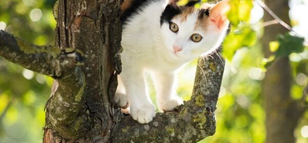 Information on Calico Cats That You Should Know.