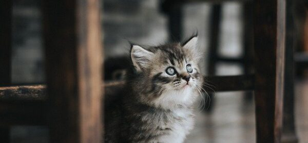Blue Eyed Kitties – Cute Kittens That You Can Fall In Love With